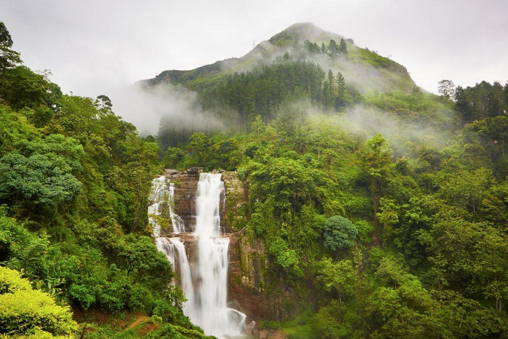 Флора на острове Шри-Ланка