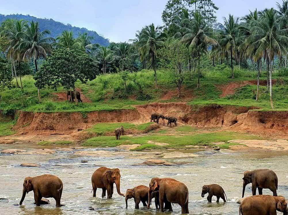 Остров Шри-Ланка в Южной Азии