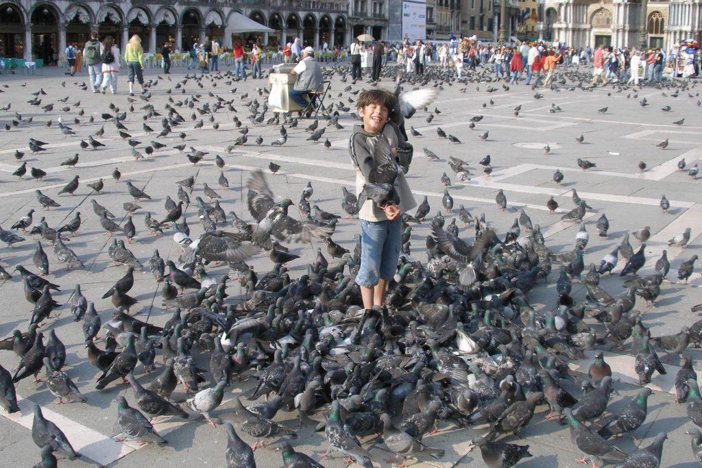 Сфотографироваться с голубями на Сан-Марко